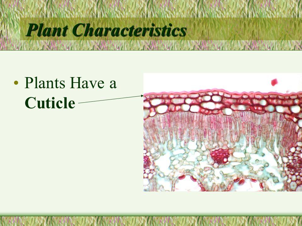 Plant Characteristics Plants Have a Cuticle