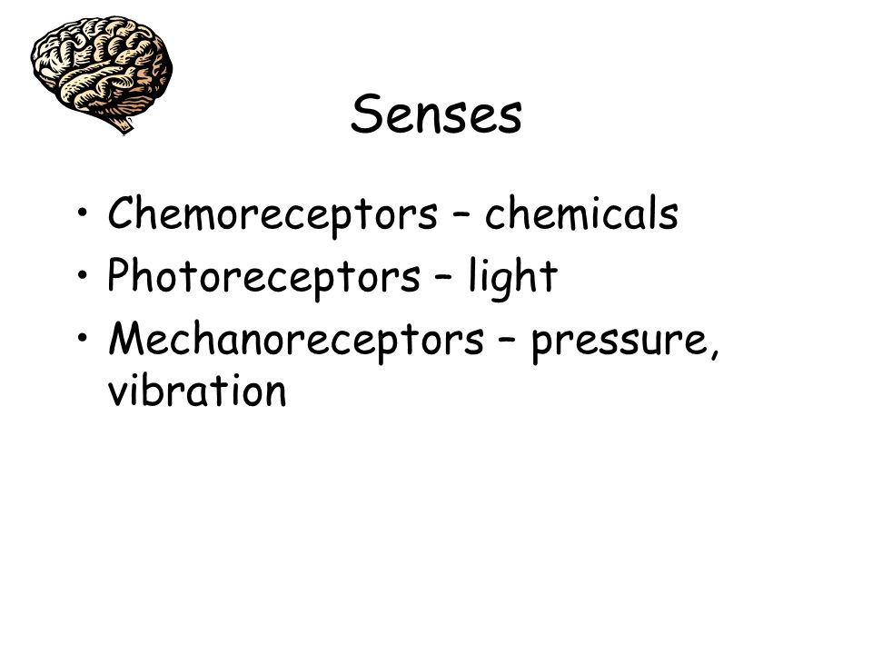 Senses Chemoreceptors – chemicals Photoreceptors – light Mechanoreceptors – pressure, vibration