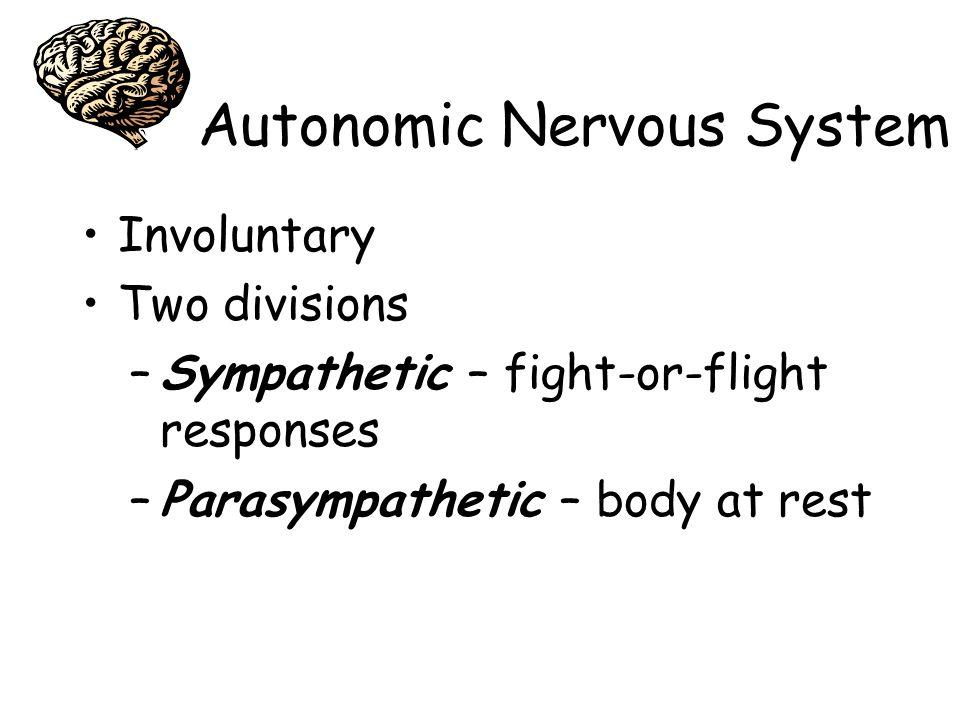 Autonomic Nervous System Involuntary Two divisions –Sympathetic – fight-or-flight responses –Parasympathetic – body at rest
