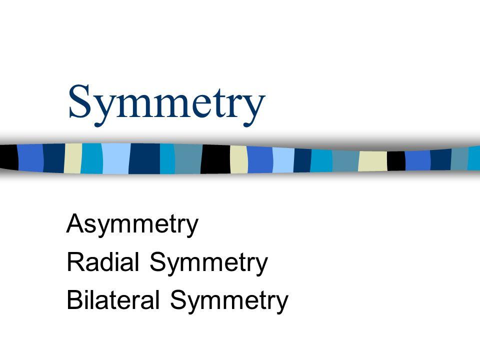 Symmetry Asymmetry Radial Symmetry Bilateral Symmetry