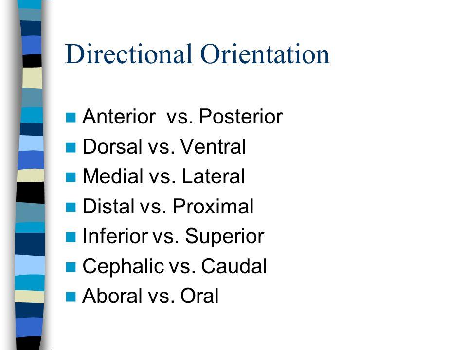 Directional Orientation Anterior vs. Posterior Dorsal vs. Ventral Medial vs. Lateral Distal vs. Proximal Inferior vs. Superior Cephalic vs. Caudal Abo