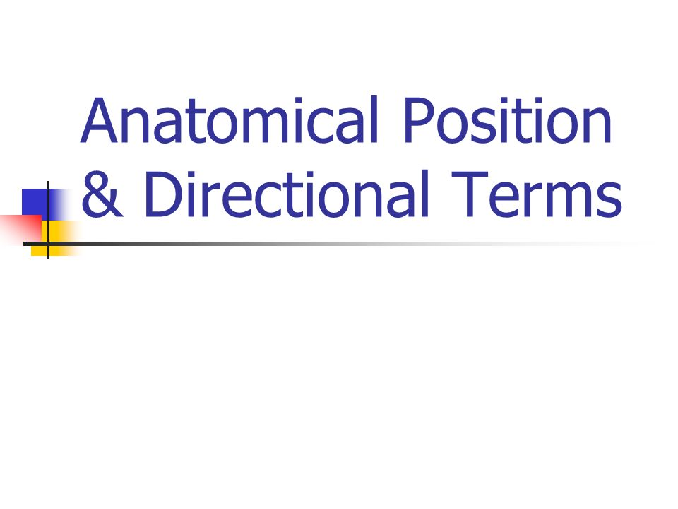Abdominal Regions Hypochondriac Epigastric Umbilical Hypogastric Inguinal/Iliac