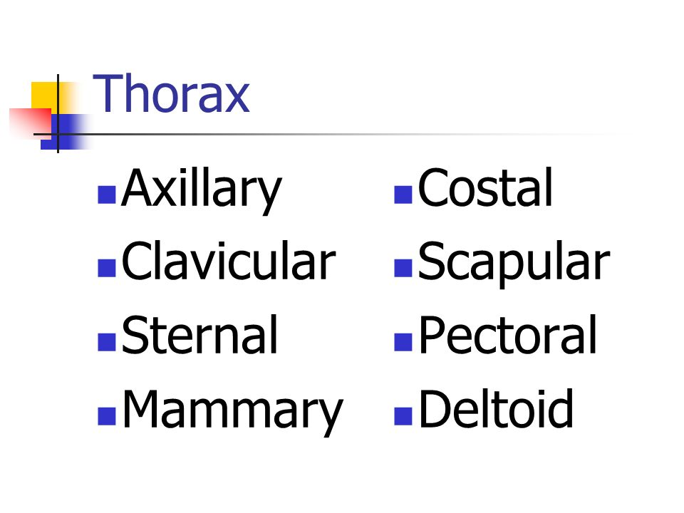 Thorax Axillary Clavicular Sternal Mammary Costal Scapular Pectoral Deltoid