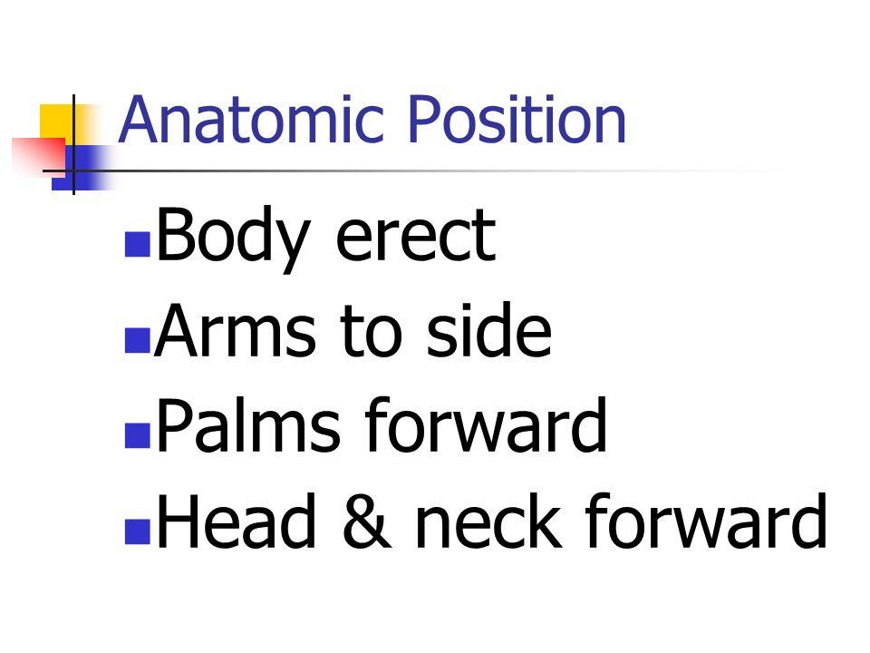 Directional Terms #1 Anterior/Ventral Posterior/Dorsal Medial/Lateral Internal/External Proximal/Distal Superior/Inferior Cranial/Caudal