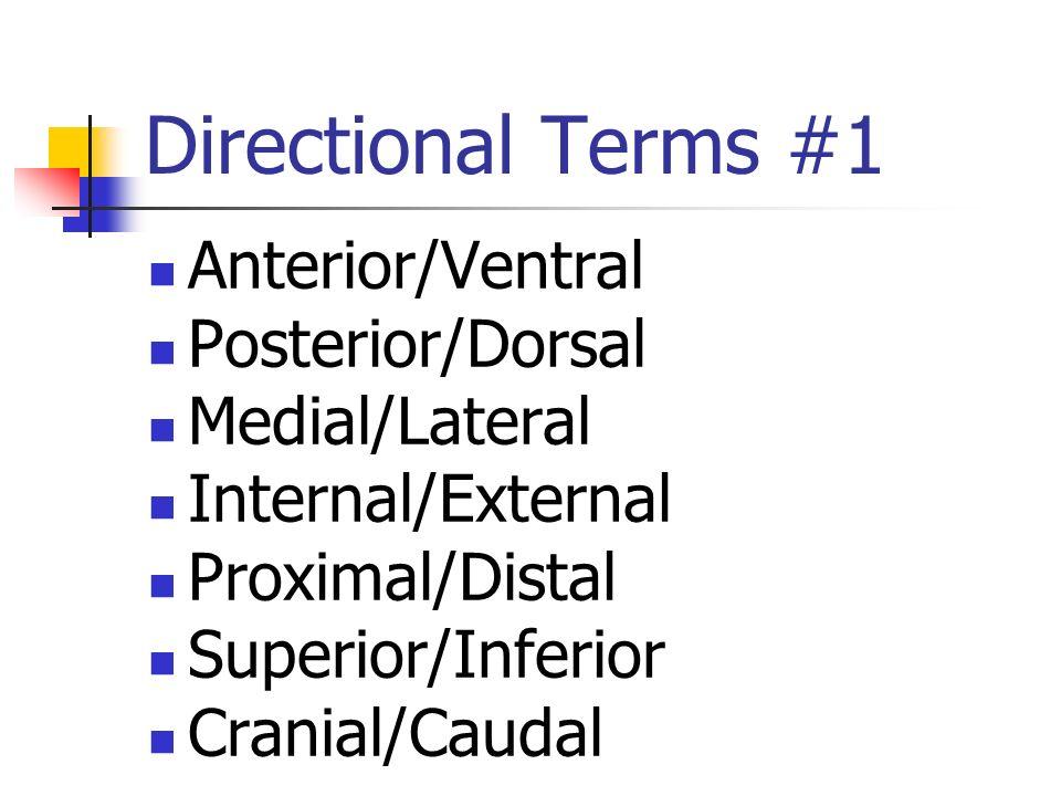 Directional Terms Flexion/Extension Afferent/Efferent Adduction/Abduction Eversion/Inversion Pronation/Supination Deep/Superficial Plantar/Palmar