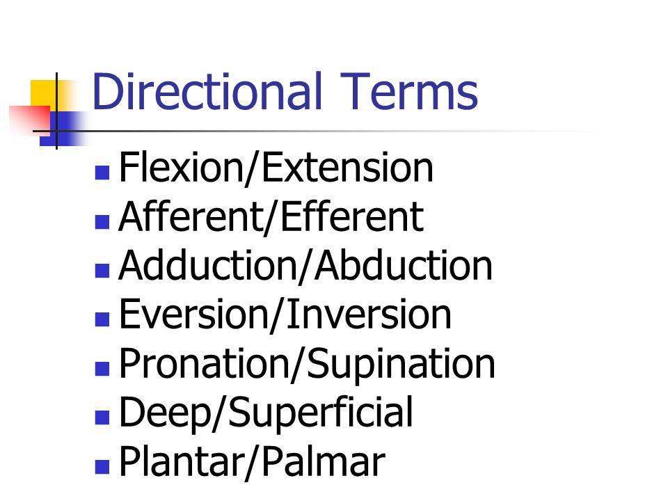 Extremities #1 Brachial Antecubital Olecranon Carpal Phalanges Manual Pollex