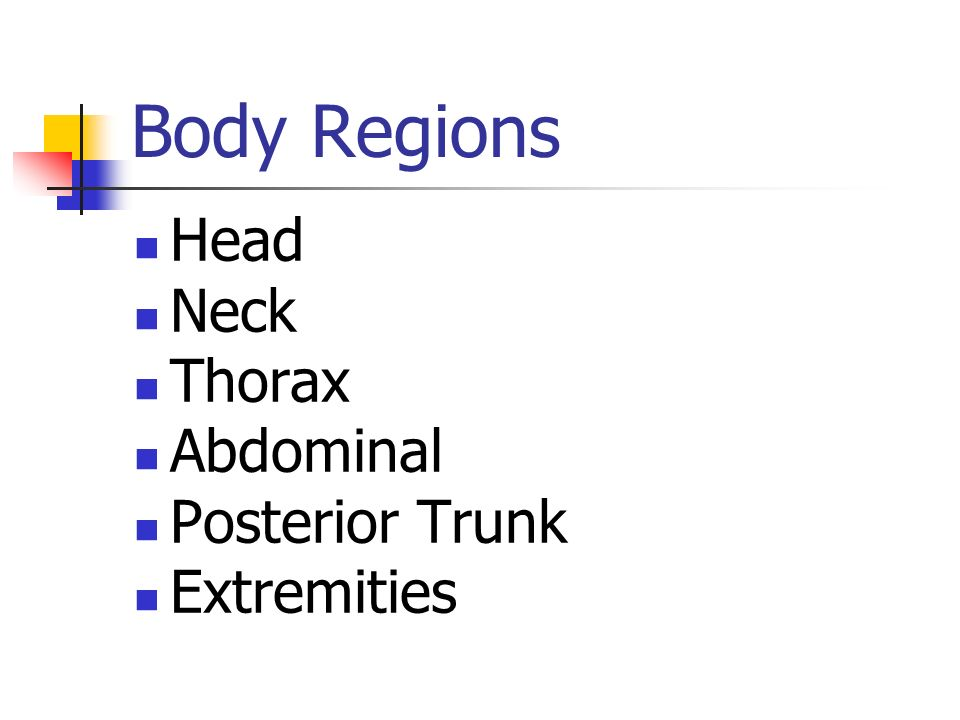 Body Regions Head Neck Thorax Abdominal Posterior Trunk Extremities