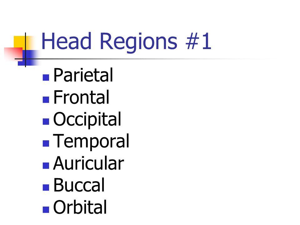 Head Regions #2 Mastoid Nasal Mental Submental Maxillary Mandibular Zygomatic