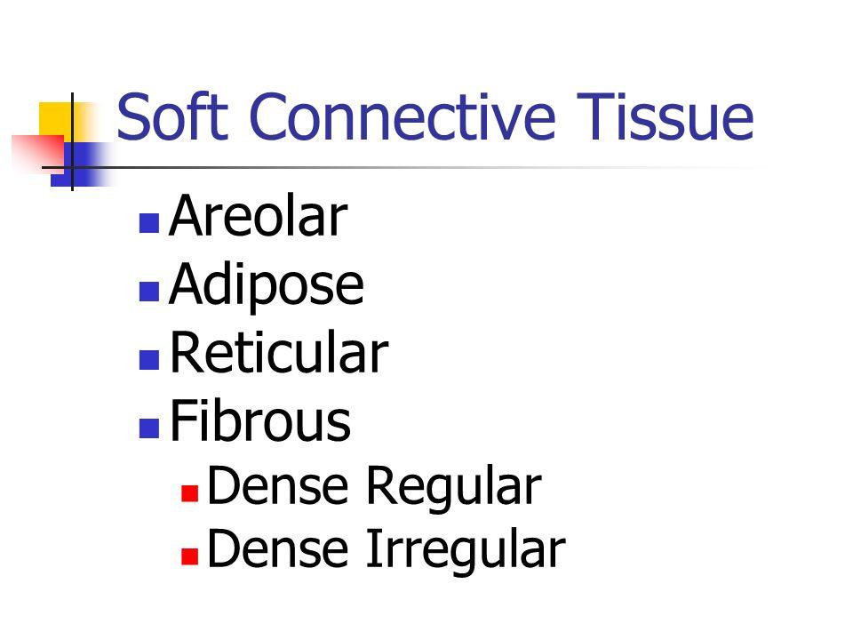 Soft Connective Tissue Areolar Adipose Reticular Fibrous Dense Regular Dense Irregular