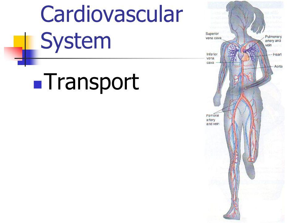 Cardiovascular System Transport