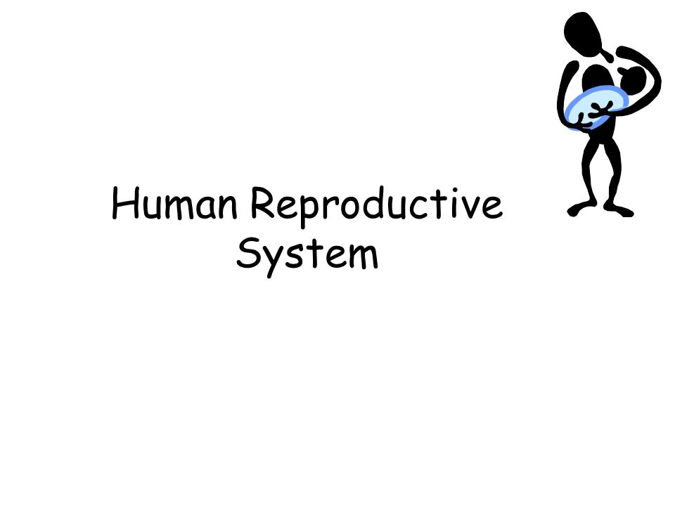 Human Reproductive System