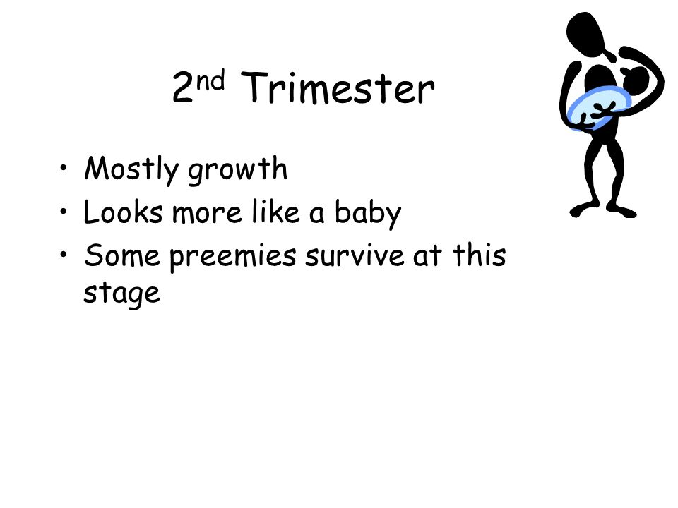2 nd Trimester Mostly growth Looks more like a baby Some preemies survive at this stage
