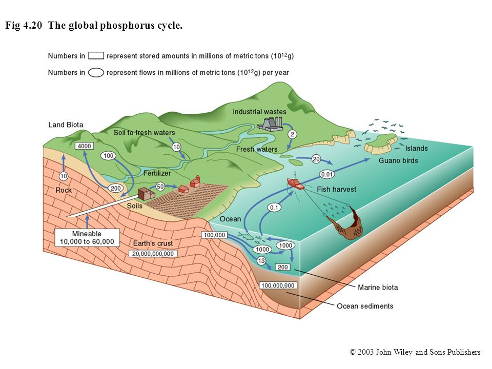 © 2003 John Wiley and Sons Publishers Fig 4.20 The global phosphorus cycle.