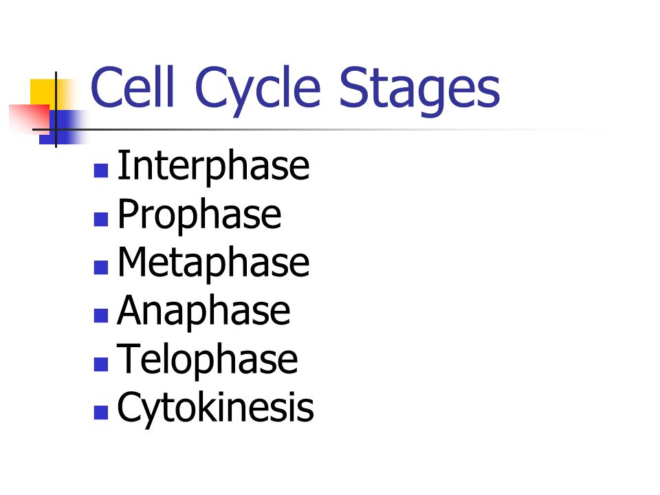 Cell Cycle Stages Interphase Prophase Metaphase Anaphase Telophase Cytokinesis