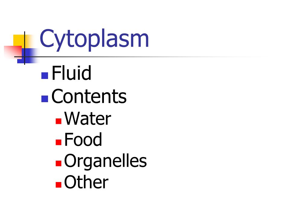 Cytoplasm Fluid Contents Water Food Organelles Other