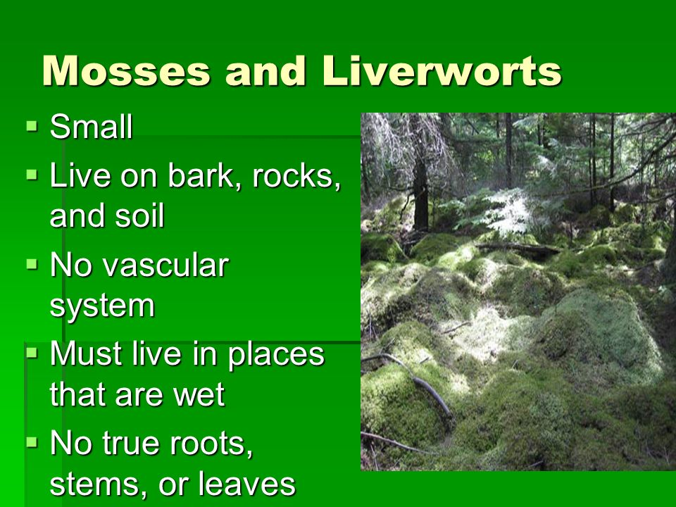Seedless Plants Mosses and Liverworts Mosses and Liverworts Ferns, Horsetails, and Club Mosses Ferns, Horsetails, and Club Mosses