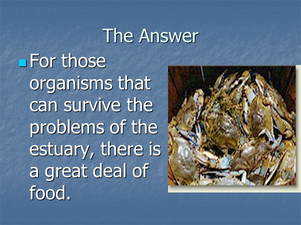 The Answer For those organisms that can survive the problems of the estuary, there is a great deal of food.
