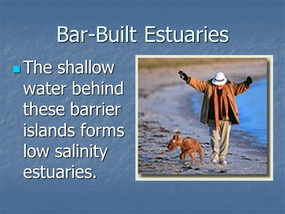 Bar-Built Estuaries The shallow water behind these barrier islands forms low salinity estuaries.