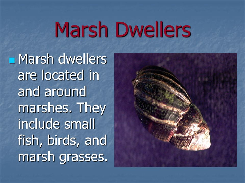 Marsh Dwellers Marsh dwellers are located in and around marshes.