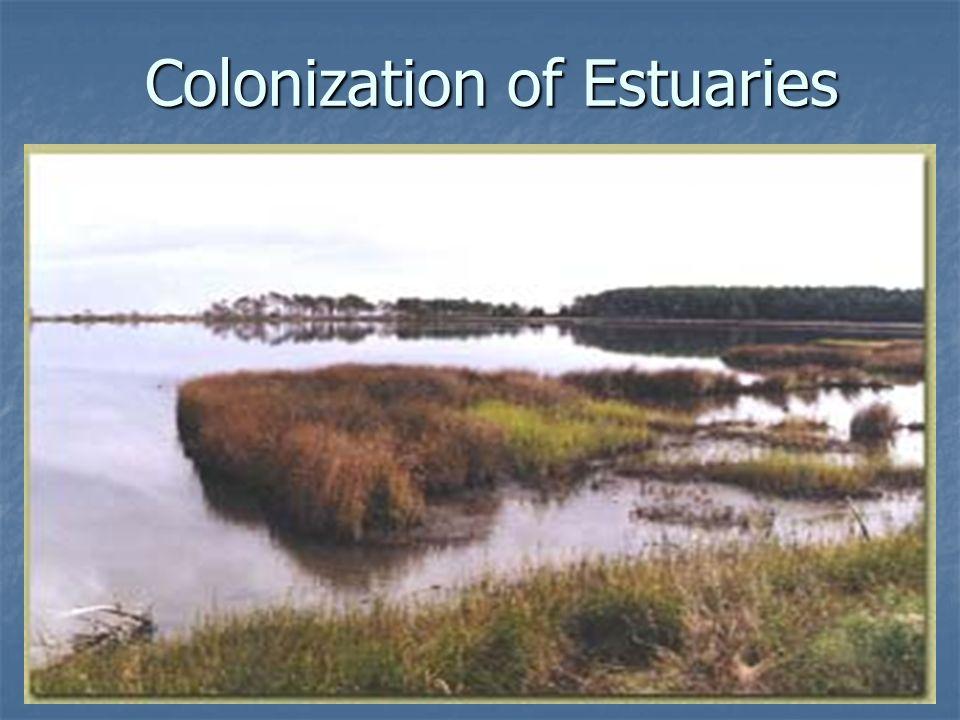 Colonization of Estuaries