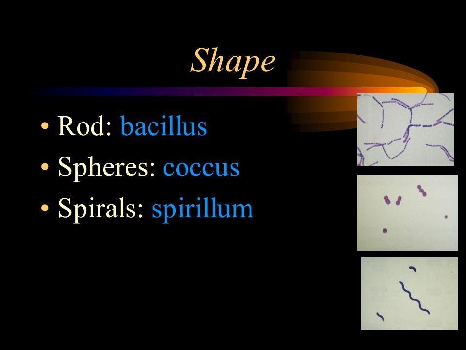 Shape Rod: bacillus Spheres: coccus Spirals: spirillum