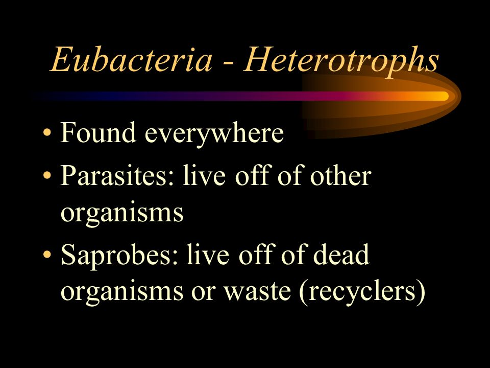 Eubacteria - Heterotrophs Found everywhere Parasites: live off of other organisms Saprobes: live off of dead organisms or waste (recyclers)