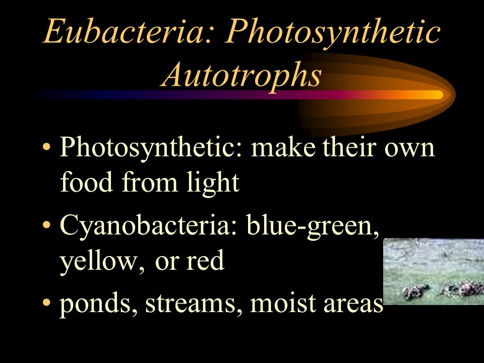 Eubacteria: Photosynthetic Autotrophs Photosynthetic: make their own food from light Cyanobacteria: blue-green, yellow, or red ponds, streams, moist a