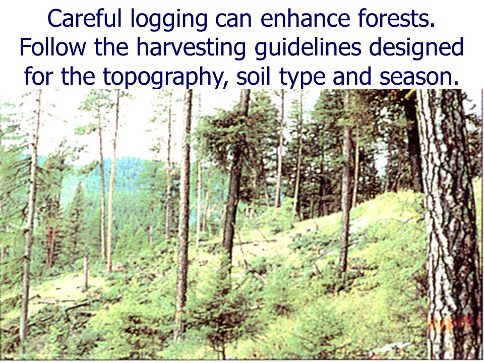 Careful logging can enhance forests.