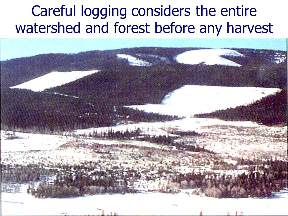 Careful logging considers the entire watershed and forest before any harvest