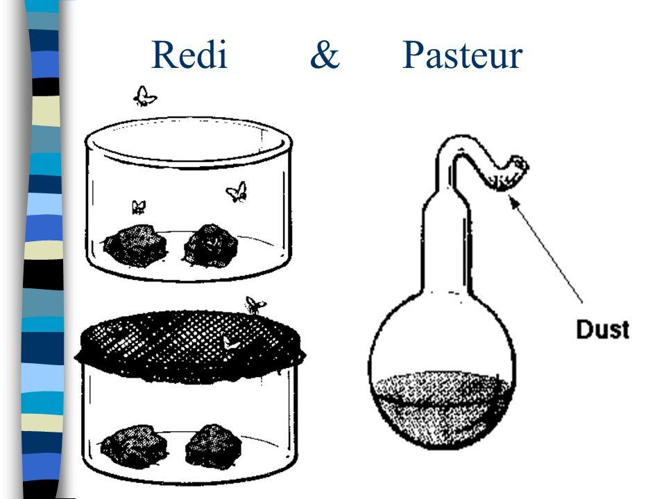 Redi & Pasteur