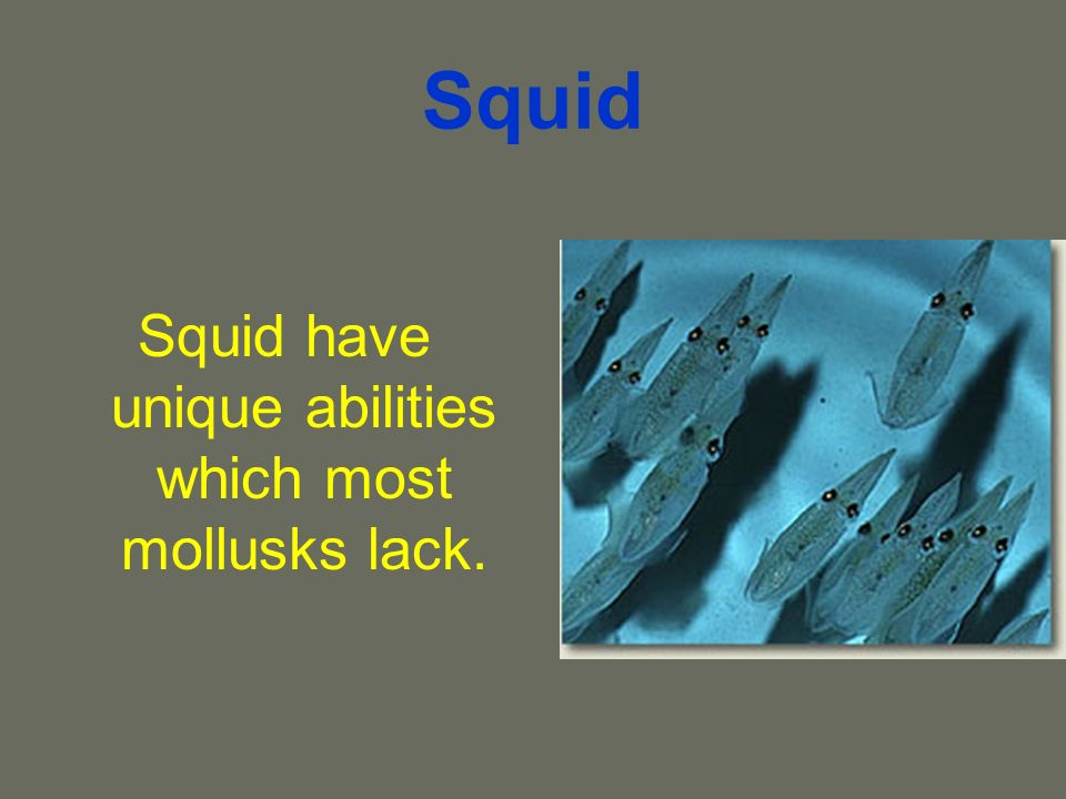 Squid Squid have unique abilities which most mollusks lack.