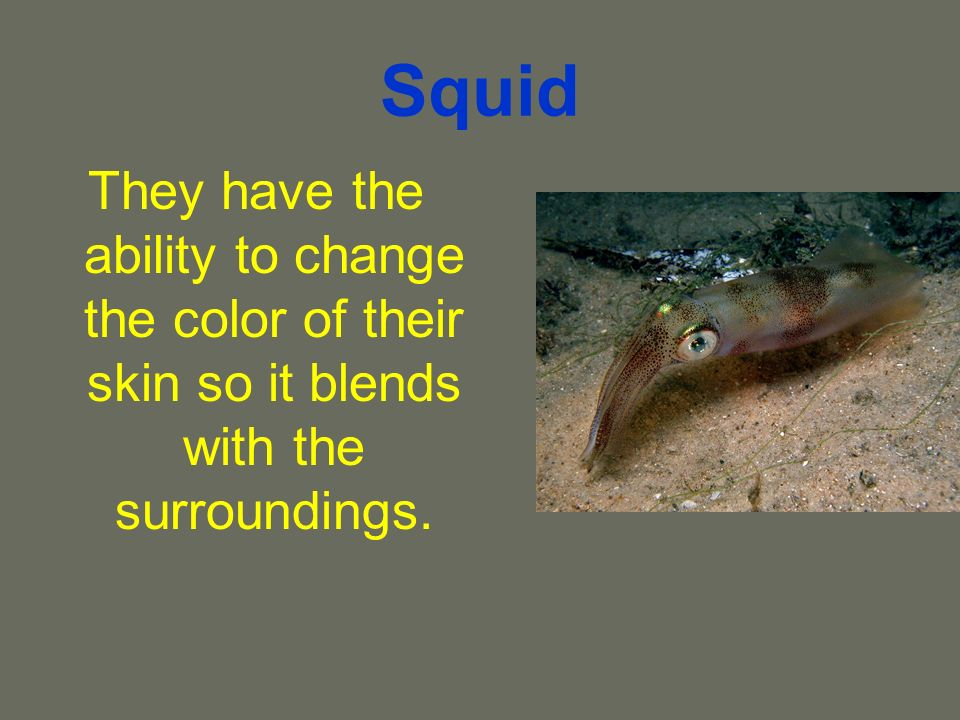 Squid They have the ability to change the color of their skin so it blends with the surroundings.