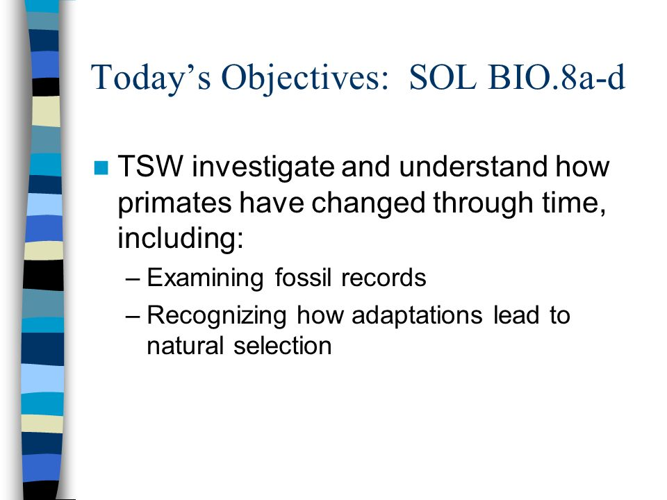 Todays Objectives: SOL BIO.8a-d TSW investigate and understand how primates have changed through time, including: –Examining fossil records –Recognizing how adaptations lead to natural selection