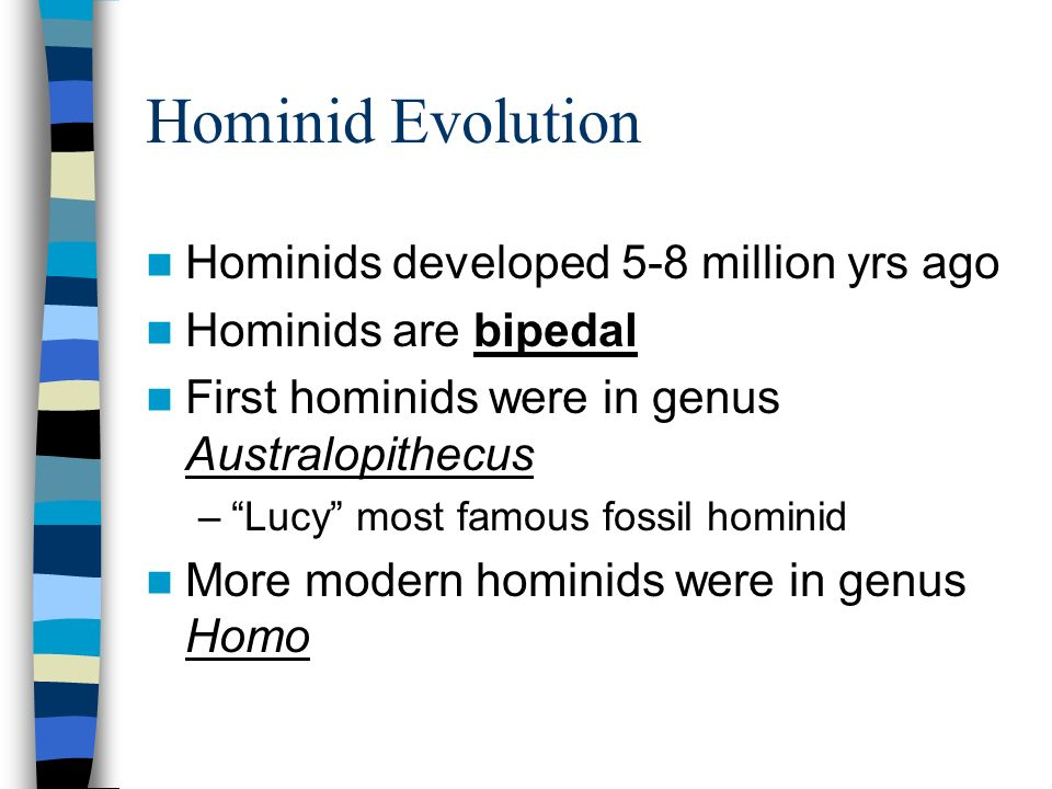 Hominid Evolution Hominids developed 5-8 million yrs ago Hominids are bipedal First hominids were in genus Australopithecus –Lucy most famous fossil hominid More modern hominids were in genus Homo