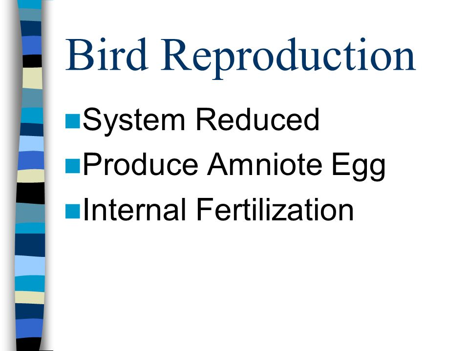 Bird Reproduction System Reduced Produce Amniote Egg Internal Fertilization