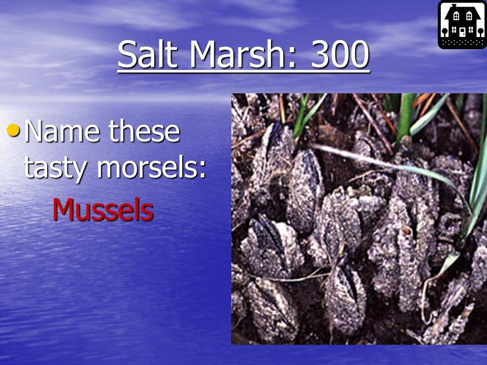 Salt Marsh: 200 What kind of musical critter is pictured here: What kind of musical critter is pictured here: Fiddler Crab Fiddler Crab