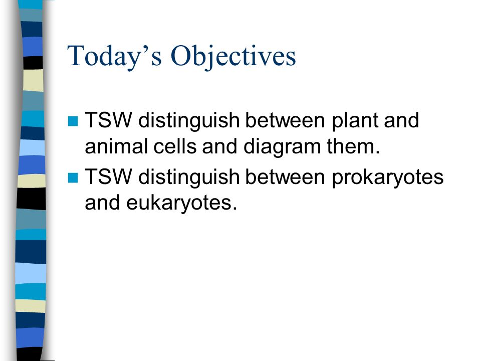 Todays Objectives TSW distinguish between plant and animal cells and diagram them. TSW distinguish between prokaryotes and eukaryotes.