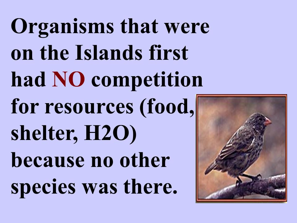 Organisms that were on the Islands first had NO competition for resources (food, shelter, H2O) because no other species was there.