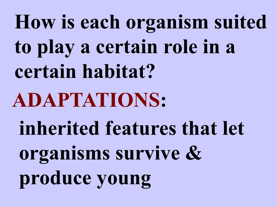 How is each organism suited to play a certain role in a certain habitat.