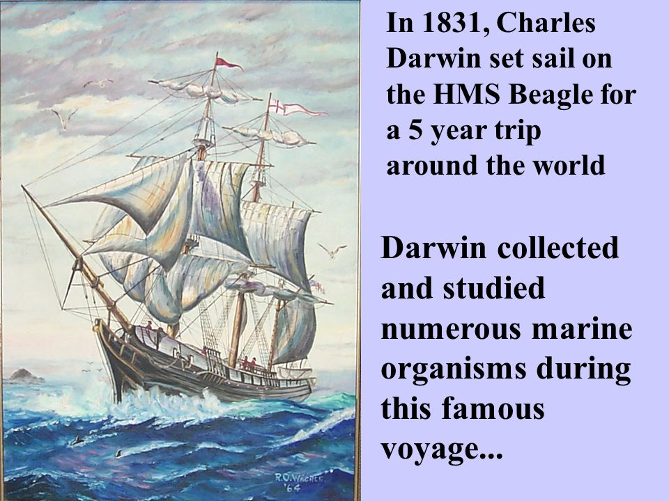 In 1831, Charles Darwin set sail on the HMS Beagle for a 5 year trip around the world Darwin collected and studied numerous marine organisms during this famous voyage...