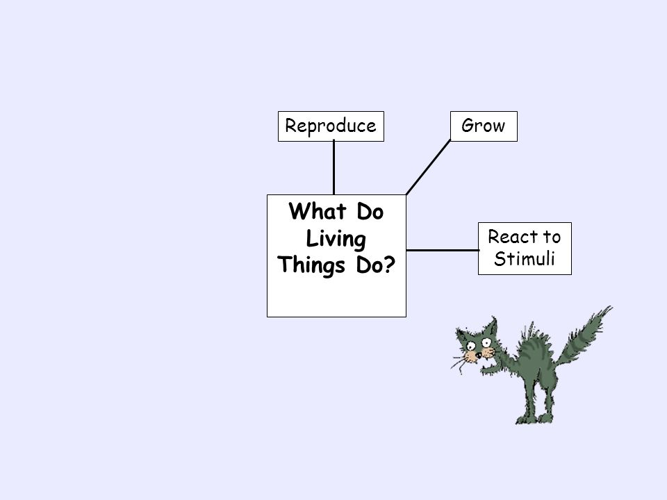 What Do Living Things Do? Reproduce GrowReact to Stimuli