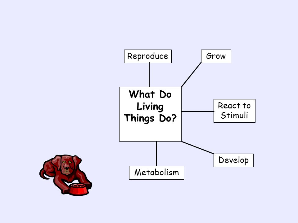 What Do Living Things Do? Reproduce GrowReact to Stimuli Develop