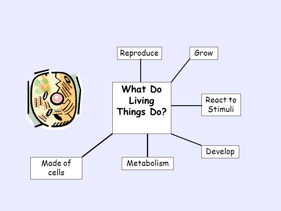 What Do Living Things Do? Reproduce GrowReact to Stimuli Develop MetabolismMade of cells