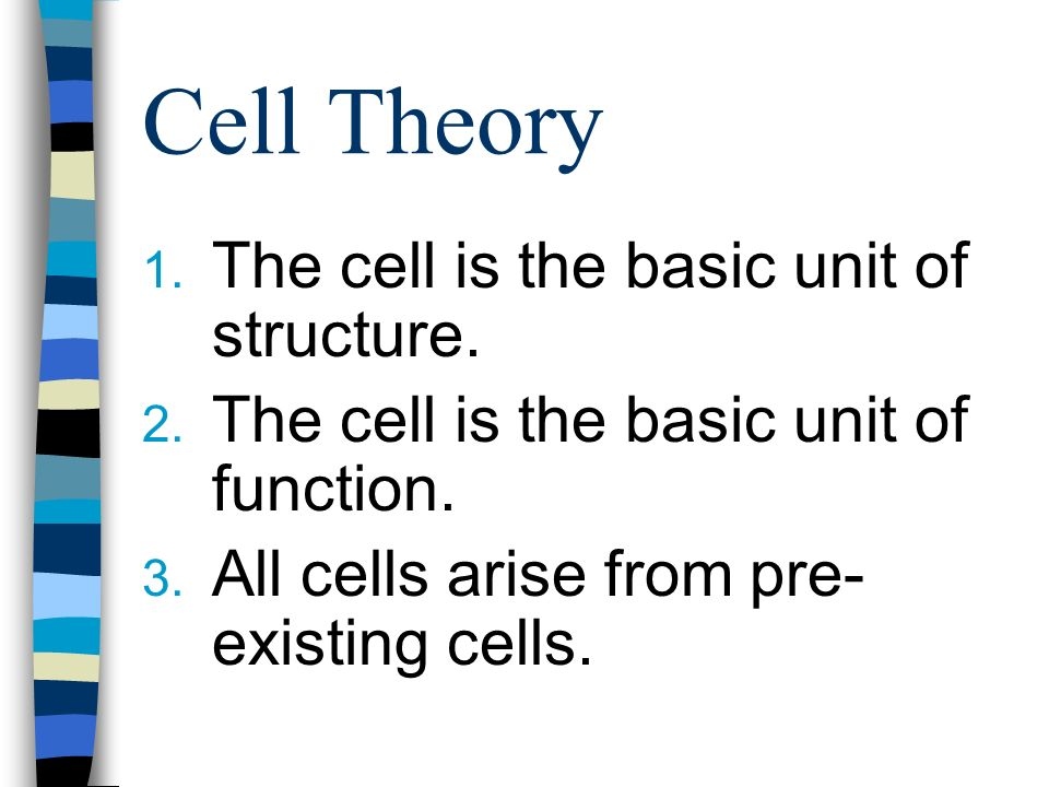 Cell Theory 1. The cell is the basic unit of structure.