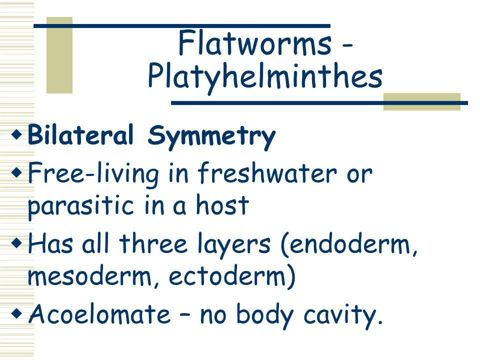 Flatworms - Platyhelminthes Bilateral Symmetry Free-living in freshwater or parasitic in a host Has all three layers (endoderm, mesoderm, ectoderm) Ac