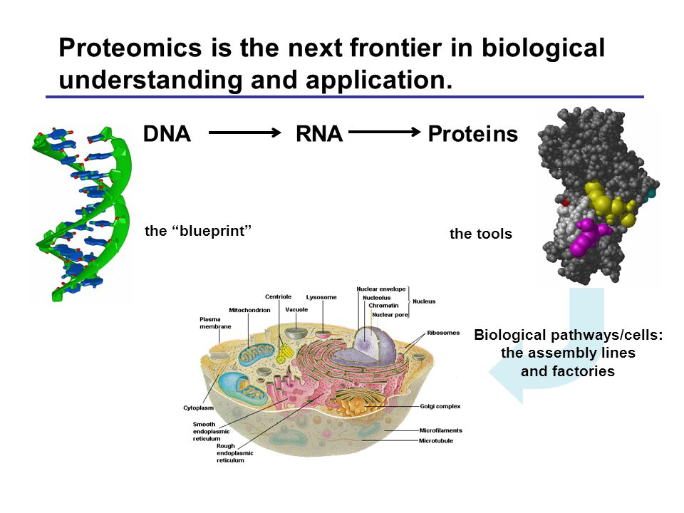 Proteomics is the next frontier in biological understanding and application.