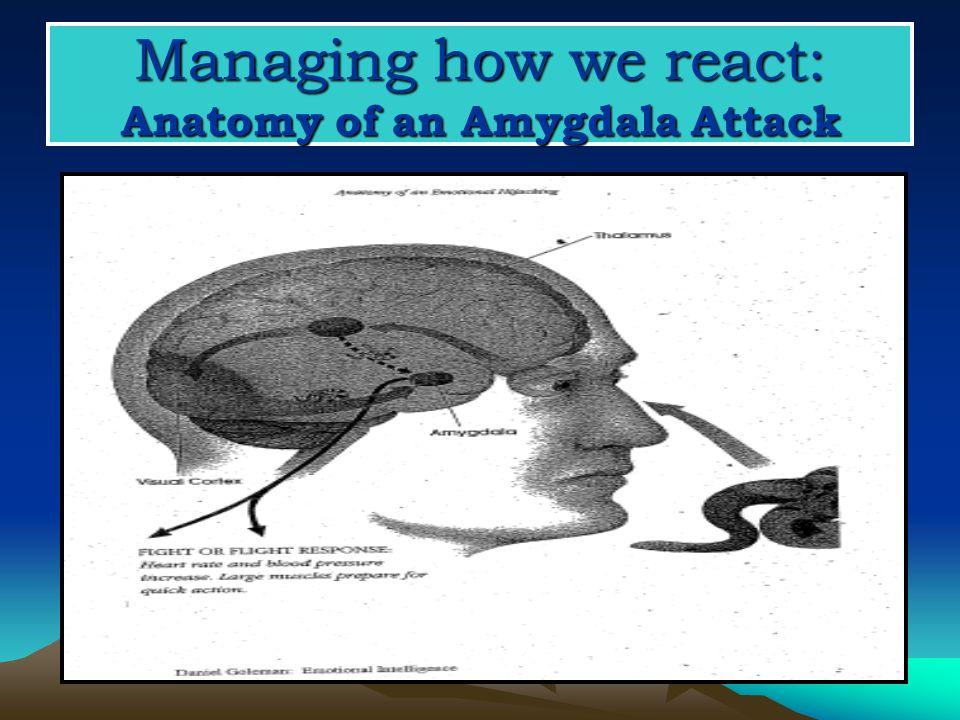 Managing how we react: Anatomy of an Amygdala Attack
