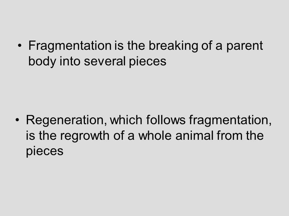 Fragmentation is the breaking of a parent body into several pieces Regeneration, which follows fragmentation, is the regrowth of a whole animal from the pieces