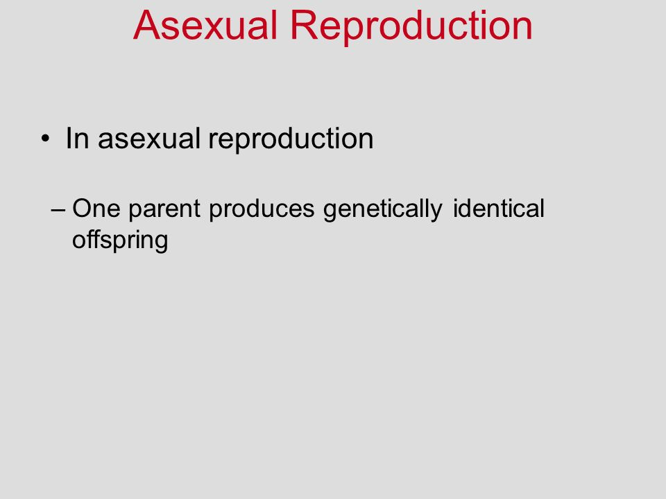 In asexual reproduction Asexual Reproduction –One parent produces genetically identical offspring