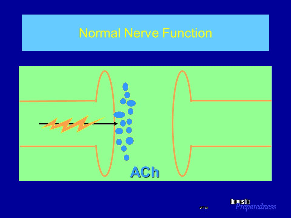 DPT 8.1 Normal Nerve Function ACh